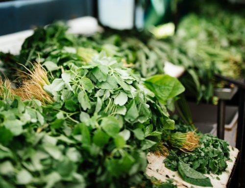 Science Validates Herbs!